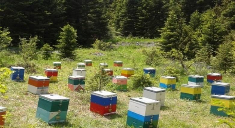 ΠΑΓΓΑΙΟ:-Εξιχνιάστηκε-άμεσα-η-κλοπή-των-47-μελισσοκυψελών