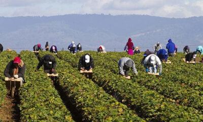 Παρατείνεται-η-προσωρινή-απασχόληση-εργατών-γης-για-90-ημέρες
